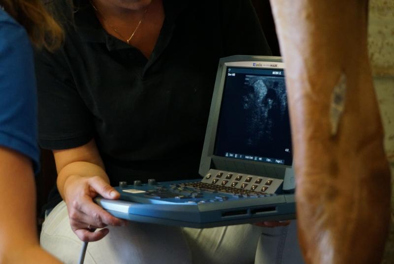 echografie en rontgen